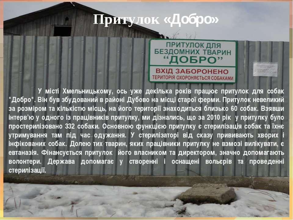 Притулок «Добро» У місті Хмельницькому, ось уже декілька років працює притуло...