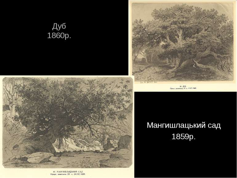Дуб 1860р. Мангишлацький сад 1859р.