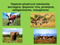 Тварини різняться зовнішнім виглядом, формою тіла, розміром, забарвленням, по...
