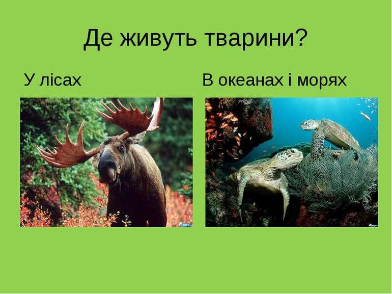 Де живуть тварини? У лісах В океанах і морях