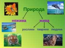 Природа нежива жива рослини тварини людина