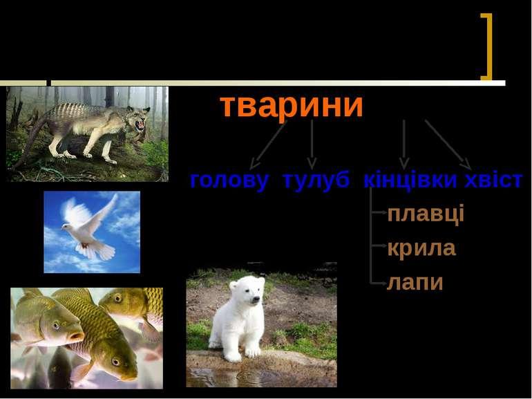 Чим схожі між собою тварини? тварини голову тулуб кінцівки хвіст плавці крила...