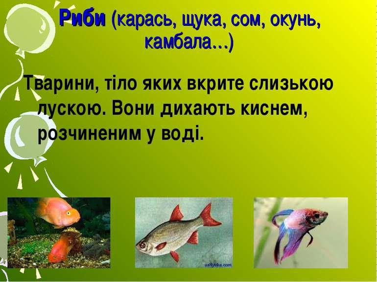 Риби (карась, щука, сом, окунь, камбала…) Тварини, тіло яких вкрите слизькою ...