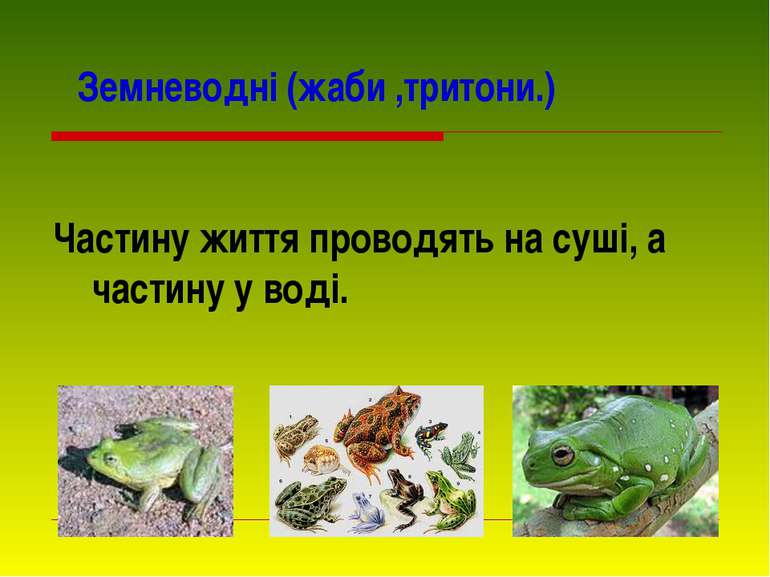 Земневодні (жаби ,тритони.) Частину життя проводять на суші, а частину у воді.