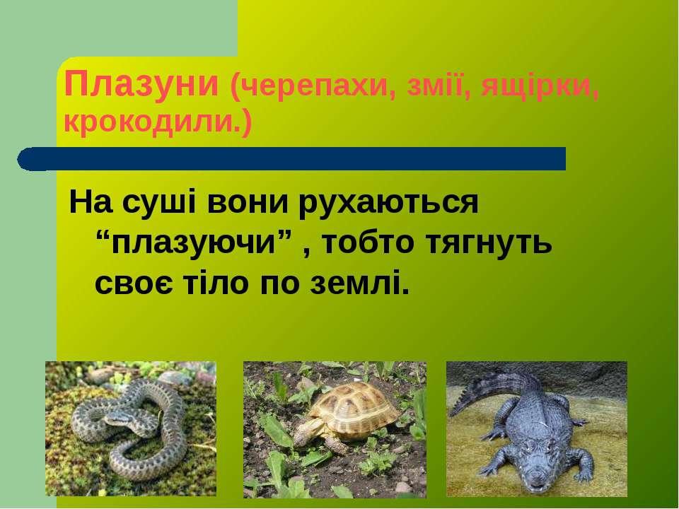 """Плазуни (черепахи, змії, ящірки, крокодили.) На суші вони рухаються """"плазуючи..."""
