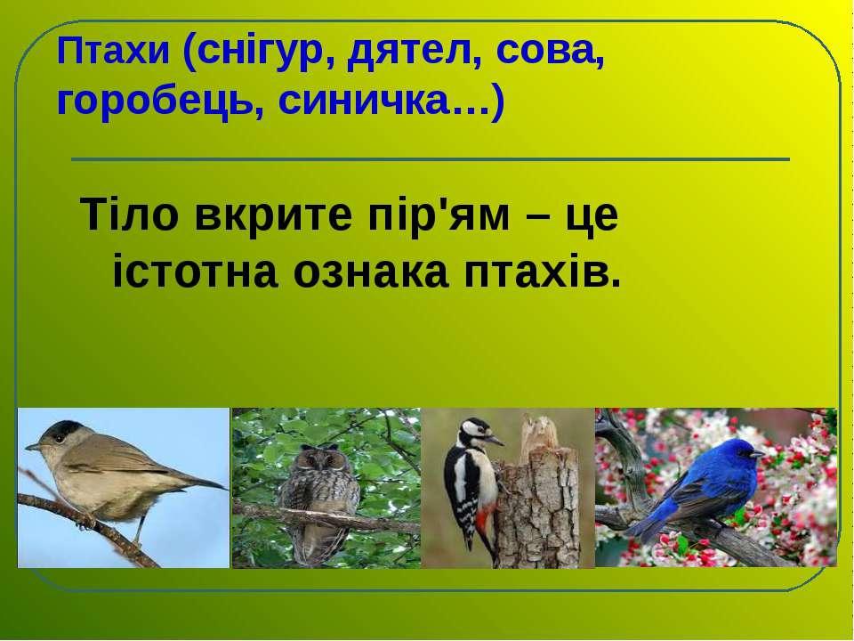 Птахи (снігур, дятел, сова, горобець, синичка…) Тіло вкрите пір'ям – це істот...