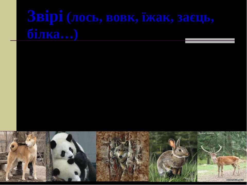 Звірі (лось, вовк, їжак, заєць, білка…) Тіло вкрите шерстю , малят вигодовуют...