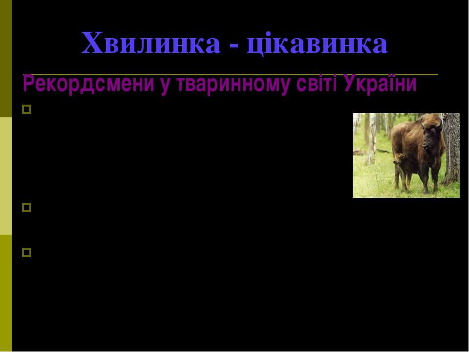 Хвилинка - цікавинка Рекордсмени у тваринному світі України Найбільшим звіром...