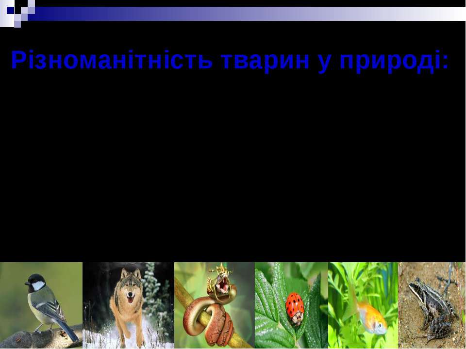 Різноманітність тварин у природі: * Комахи * Плазуни * Риби * Птахи * Земново...