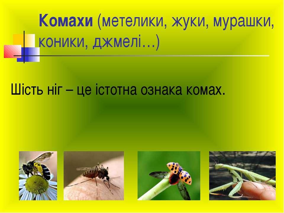 Комахи (метелики, жуки, мурашки, коники, джмелі…) Шість ніг – це істотна озна...