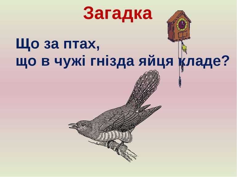 Загадка Що за птах, що в чужі гнізда яйця кладе?