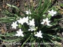 Зіркову вроду передають квіточки рястки