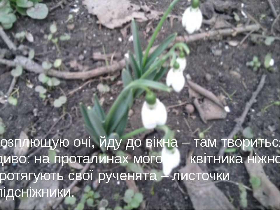 Розплющую очі, йду до вікна – там твориться диво: на проталинах мого квітника...