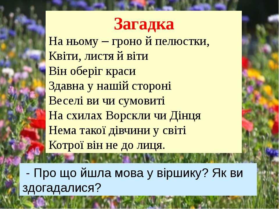 Загадка На ньому – гроно й пелюстки, Квіти, листя й віти Він оберіг краси ...