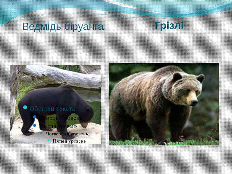Ведмідь біруанга Грізлі