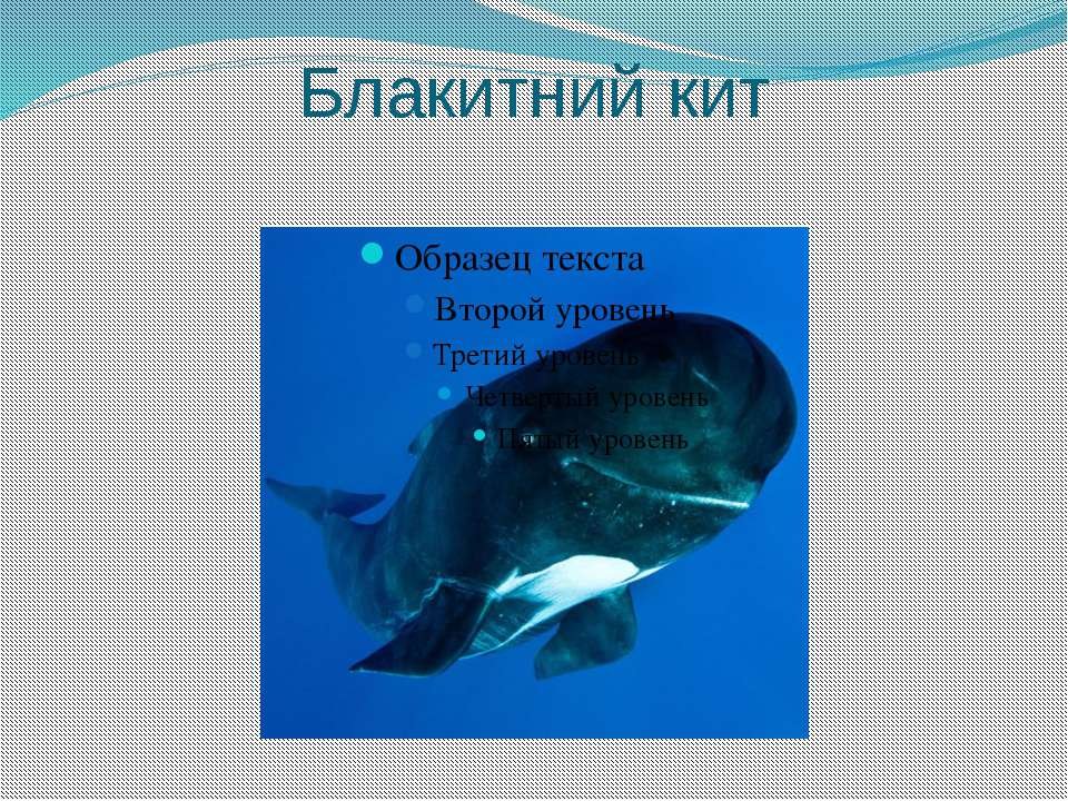 Блакитний кит