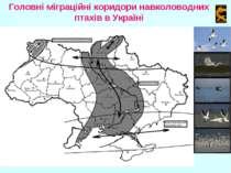 Головні міграційні коридори навколоводних птахів в Україні