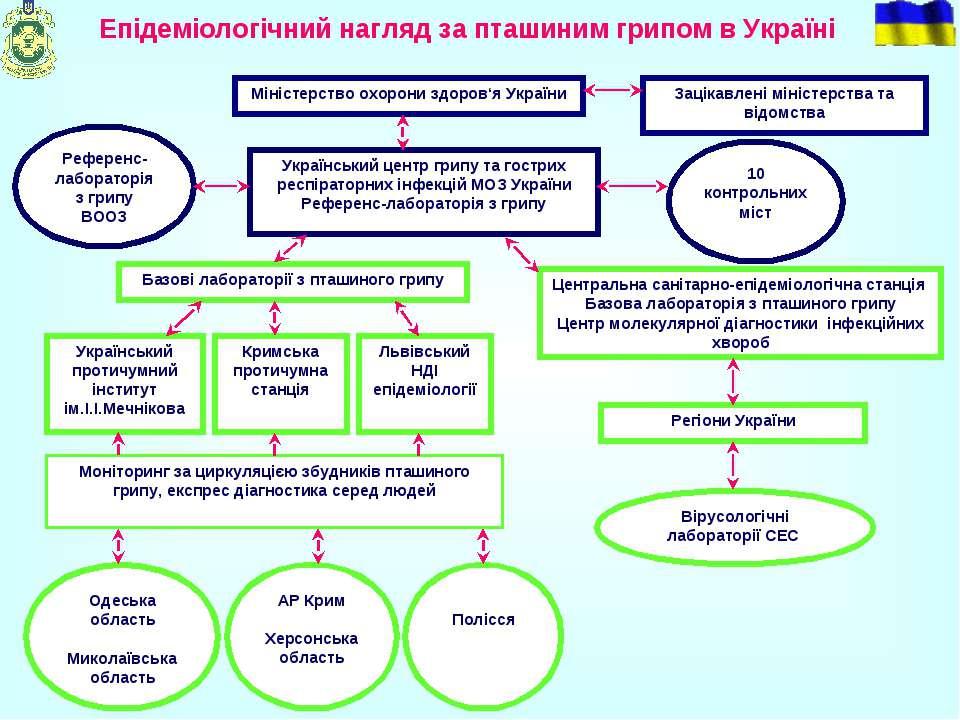 Епідеміологічний нагляд за пташиним грипом в Україні Міністерство охорони здо...