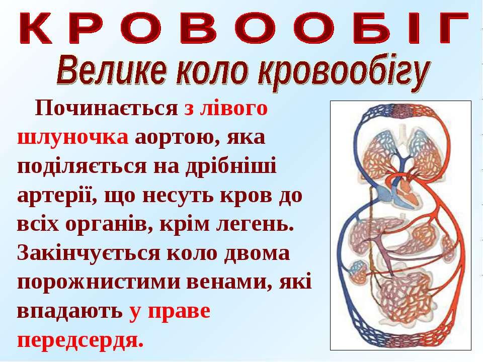 Починається з лівого шлуночка аортою, яка поділяється на дрібніші артерії, що...