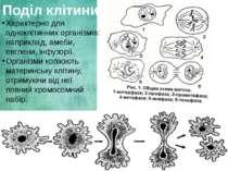 Поділ клітини Характерно для одноклітинних організмів: наприклад, амеби, евгл...
