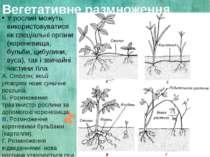 Вегетативне размноження У рослин можуть використовуватися як спеціальні орган...