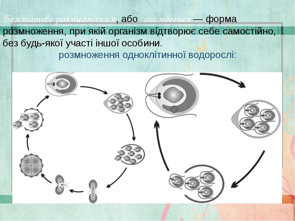 Безстатеве розмноження, або агамогенез — форма розмноження, при якій організм...