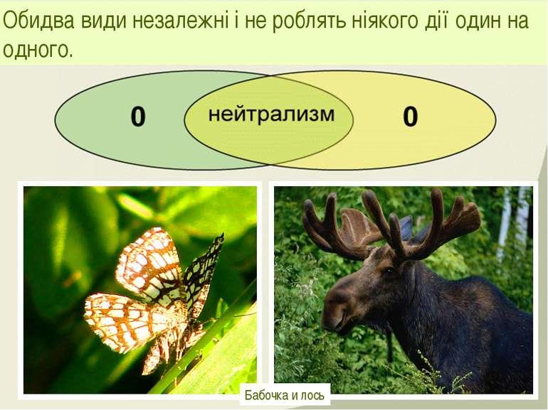 Обидва види незалежні і не роблять ніякого дії один на одного. Бабочка и лось