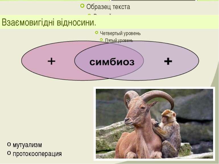 Взаємовигідні відносини. мутуализм протокооперация