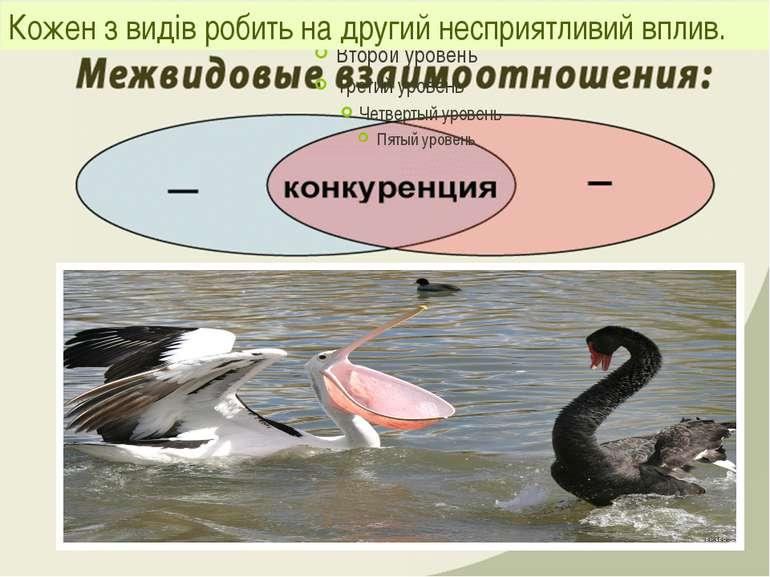 Кожен з видів робить на другий несприятливий вплив.