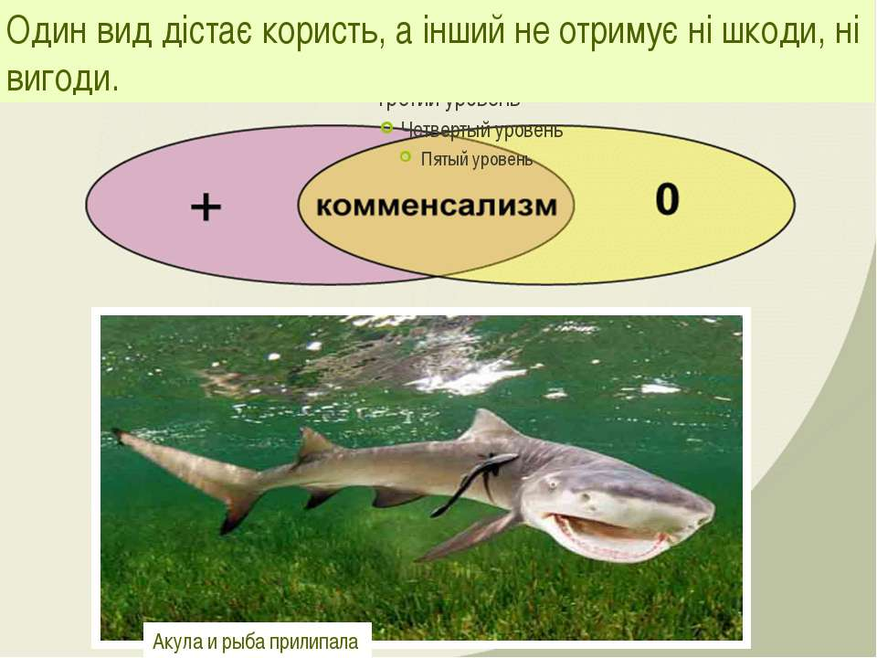Один вид дістає користь, а інший не отримує ні шкоди, ні вигоди. Акула и рыба...