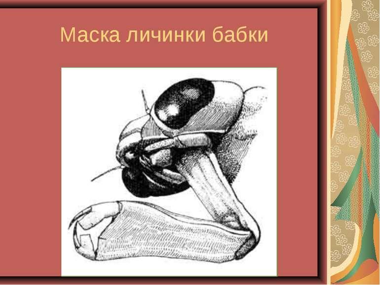 Маска личинки бабки