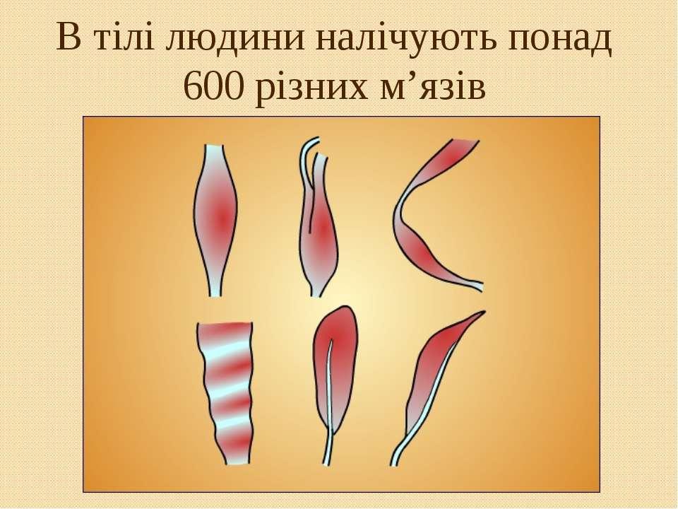 В тілі людини налічують понад 600 різних м'язів