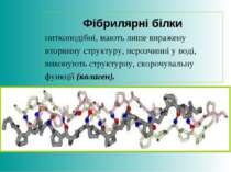 Фібрилярні білки ниткоподібні, мають лише виражену вторинну структуру, нерозч...