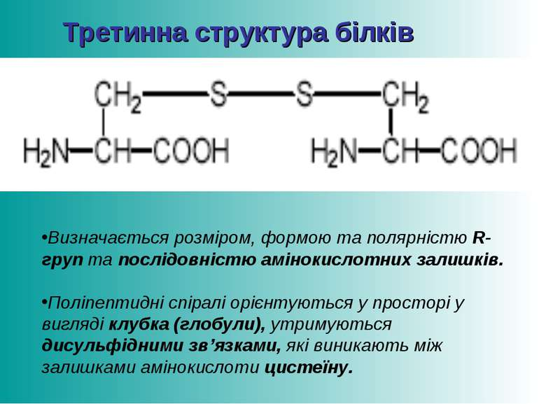 Третинна структура білків Визначається розміром, формою та полярністю R-груп ...
