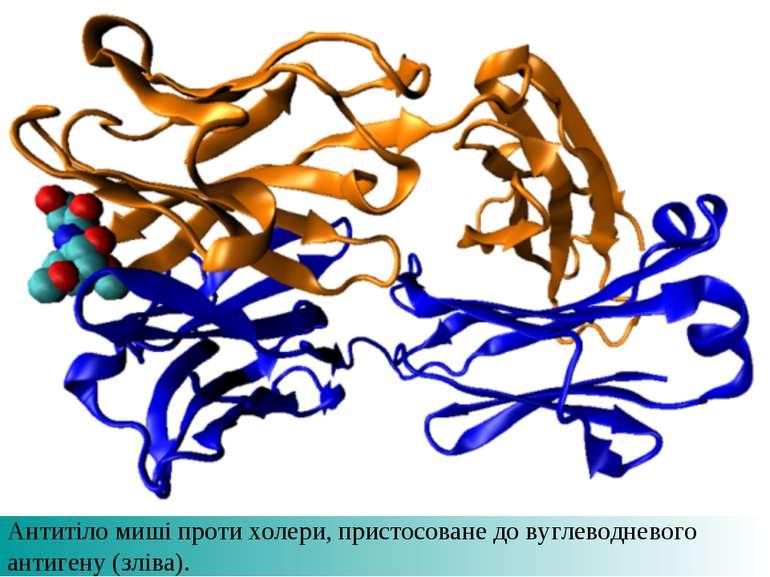 Антитіло миші проти холери, пристосоване до вуглеводневого антигену (зліва).