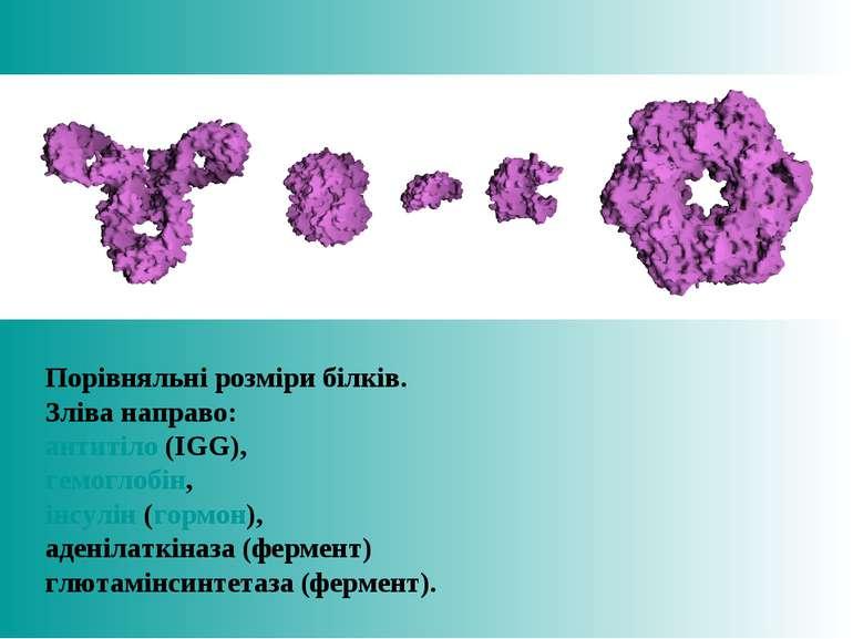 Порівняльні розміри білків. Зліва направо: антитіло (IGG), гемоглобін, інсулі...