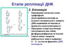 Етапи реплікації ДНК 2. Елонгація Приєднання азотистих основ трифосфатів дезо...