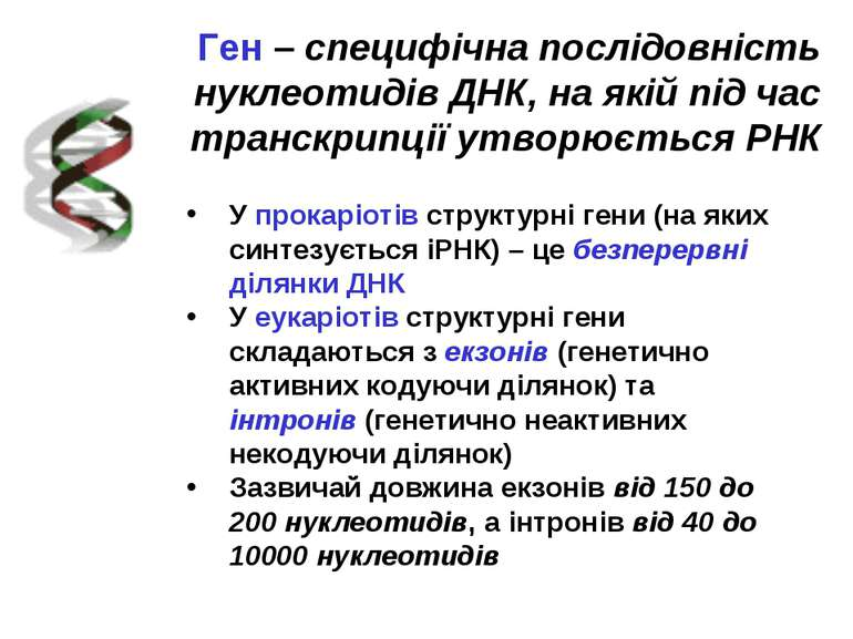 Ген – специфічна послідовність нуклеотидів ДНК, на якій під час транскрипції ...