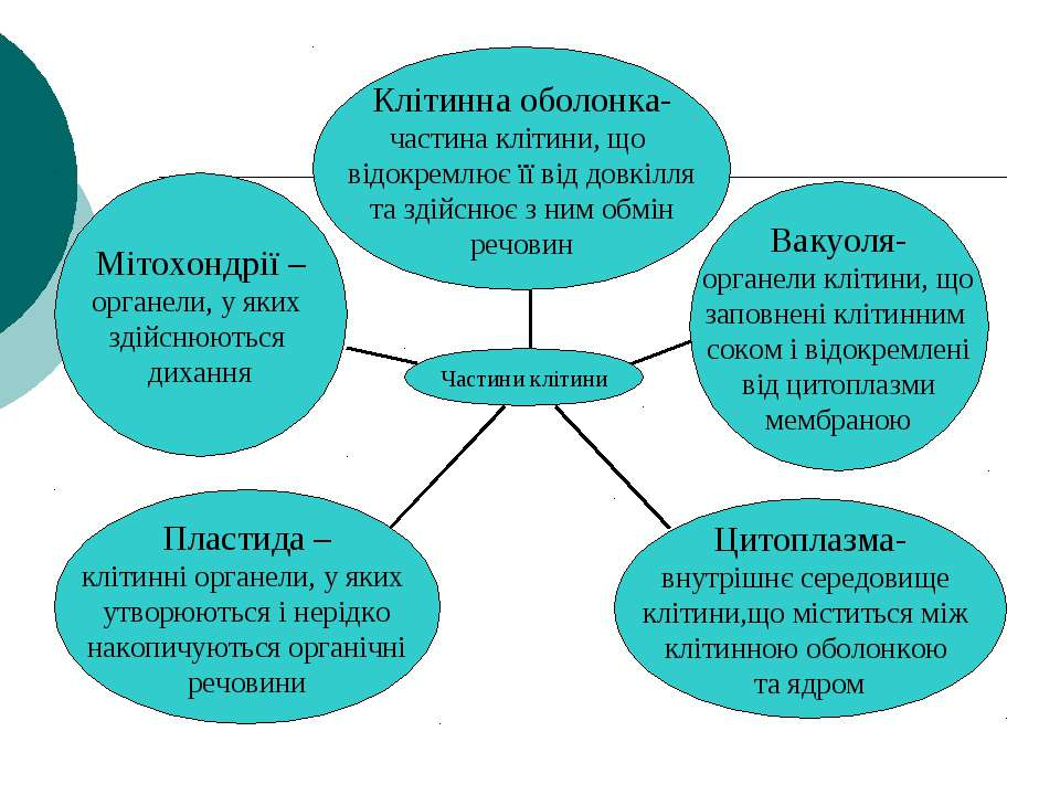 частини клітини