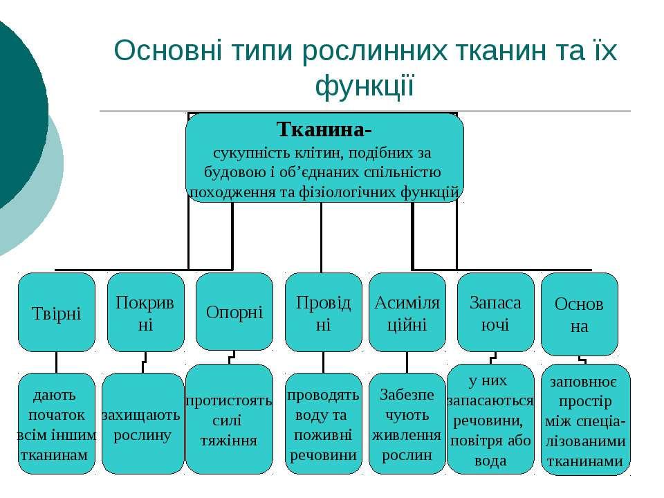 Основні типи рослинних тканин та їх функції
