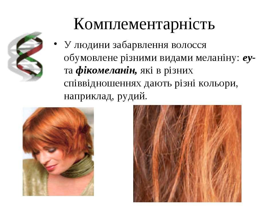 Комплементарність У людини забарвлення волосся обумовлене різними видами мела...