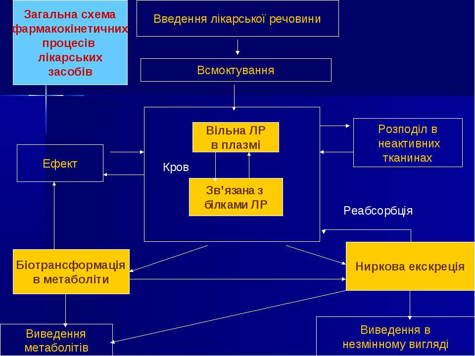 Введення лікарської речовини Всмоктування Вільна ЛР в плазмі Зв'язана з білка...