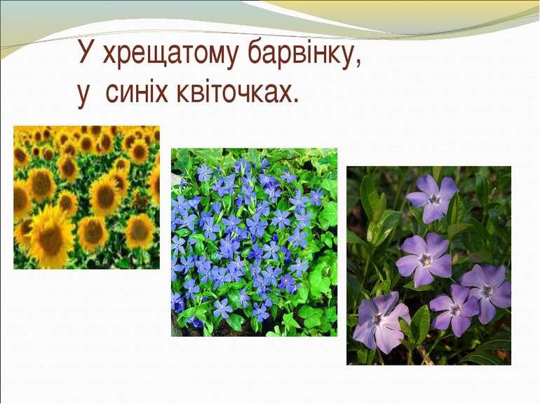 У хрещатому барвінку, у синіх квіточках.