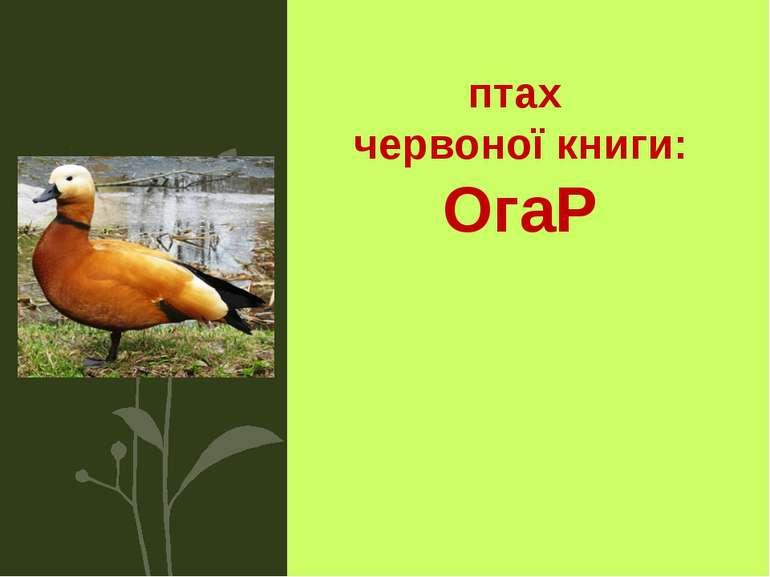 птах червоної книги: ОгаР