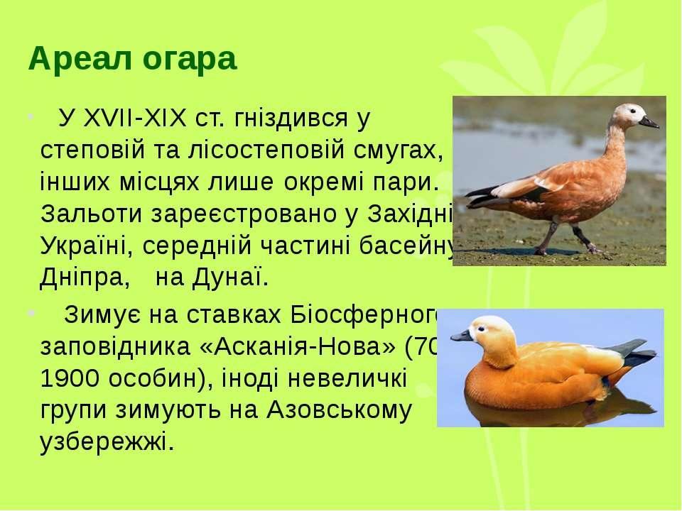 Ареал огара У XVII-XIX ст. гніздився у степовій та лісостеповій смугах, в інш...