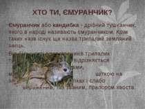 Ємуранчик або кандибка - дрібний тушканчик, якого в народі називають ємуранчи...