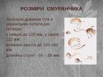 Загальна довжина тіла в українських популяціях складає: у самців до 120 мм, у...