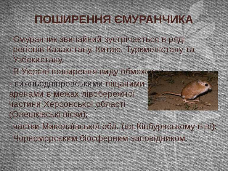 Ємуранчик звичайний зустрічається в ряді регіонів Казахстану, Китаю, Туркмені...