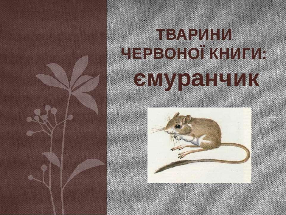 ТВАРИНИ ЧЕРВОНОЇ КНИГИ: ємуранчик