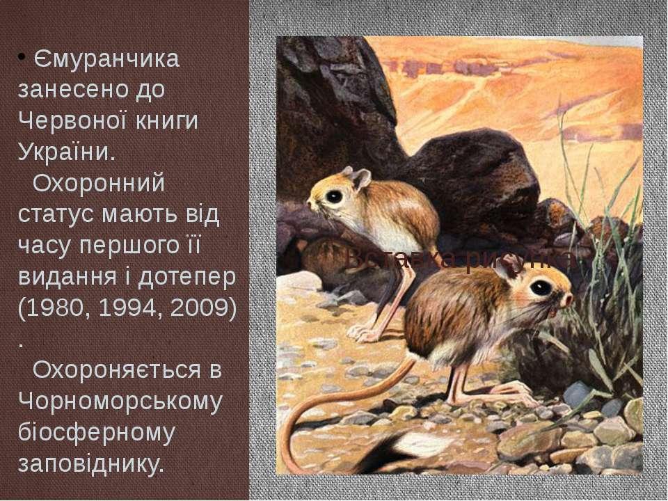 Ємуранчика занесено до Червоної книги України. Охоронний статус мають від час...